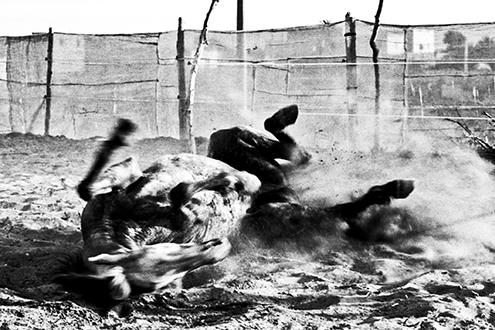 Horse 12 x 18 © Emy Nassy